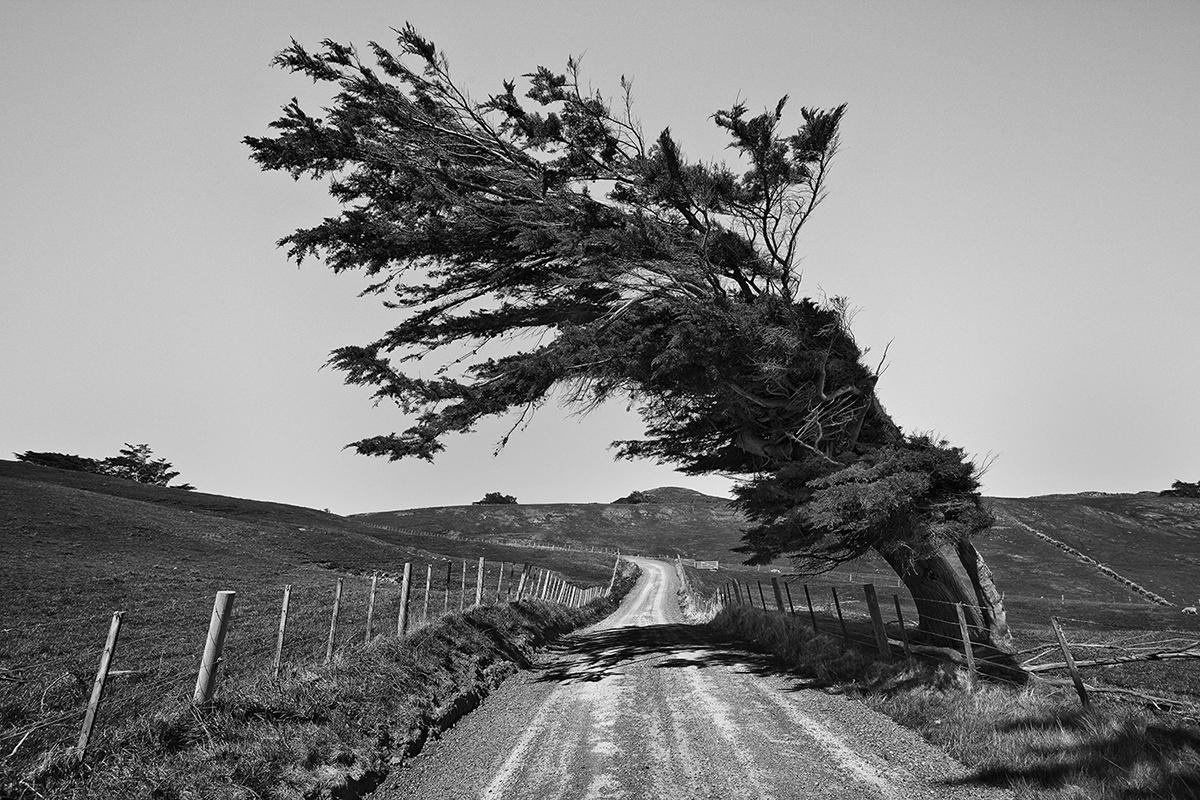 Road & Tree